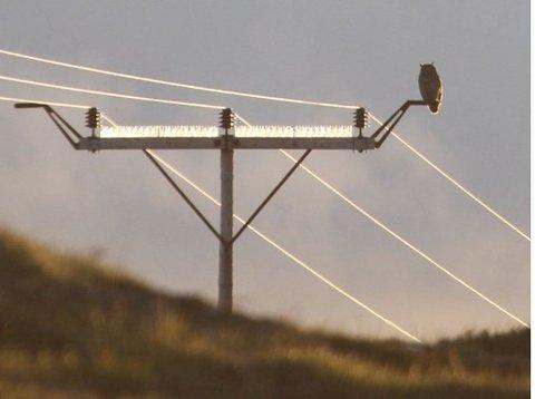Sittepinne som stikker ut fra mastene gjør at hubroen ikke så lett kommer i kontakt med ledningene.