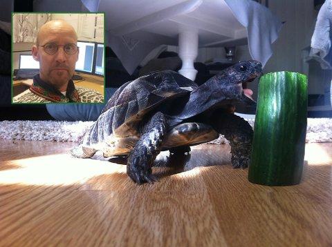 Eier Ulf Minge er glad for at skilpadden Thorleif ble funnet i god behold. På dette bildet er Thorleif 8 år, tatt i 2012.