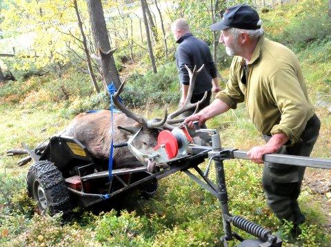 NY REKORD: Storviltjegerne i Lesja skjøt 141 dyr av hjortekvoten på 165 i høst.