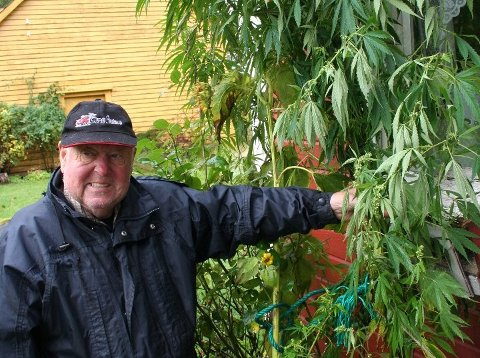CANNABISPLANTE: Christian Bull Tornøe med cannabisplanta som hadde rukke å veksa seg høg på baksida av huset hans etter at han hadde kjøpt fuglefrø på Europris.