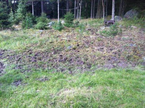 VILLSVIN PÅ FERDE?: Slik så området rundt Elin Brinchs hytte ved Søndre Mangen ut da hun ankom lørdag. Foto: Privat