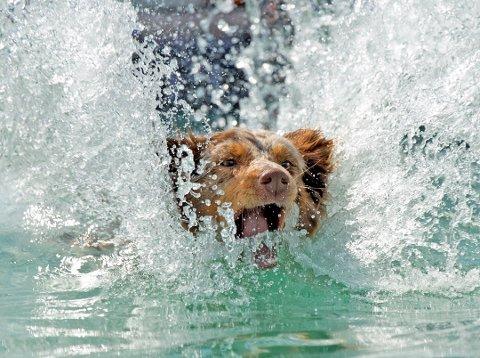 Hunder er menneskets beste venn - men også en betydelig miljø- og klimabelastning. Foto: David Hartley/rex/shutterstock