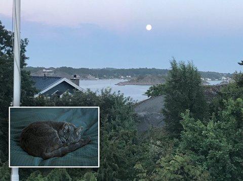 TRIST START PÅ JULA: Dette er utsikten fra familiehytta til Theis Kløvstad. Det var her han fant katten død, sannsynligvis etter å ha spist på en forgiftet mus.