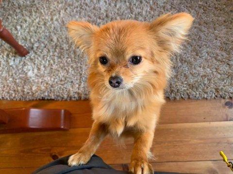 HAR NOEN SETT ROSIE? Familie og hundepasser er i en desperat jakt etter å få hunden hjem.