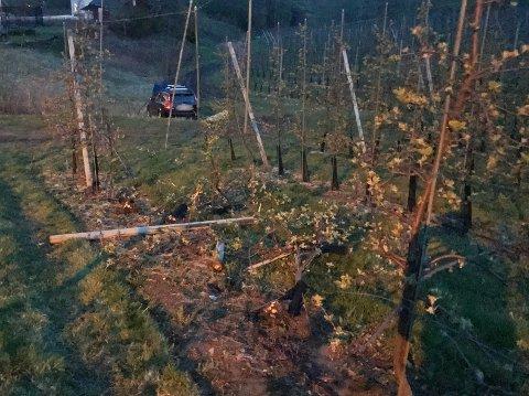 EPLEHAGE: Bilen havnet langt ut på et jorde, og tok med seg mange epletrær på turen.