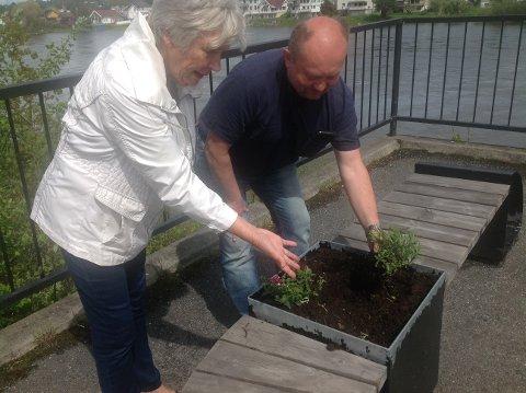 Satt ut: Vanningssjef Tore Hoen og Toril Furuheim ordner til blomsterkassene som ble satt ut i Hokksund sentrum.