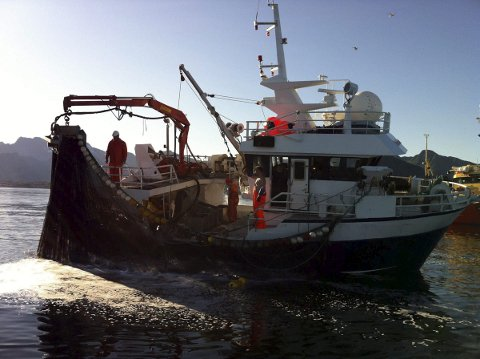 MAKRELL: Makrellkvoten blir redusert til neste år. Arkivfoto:  Knut H. Johanen