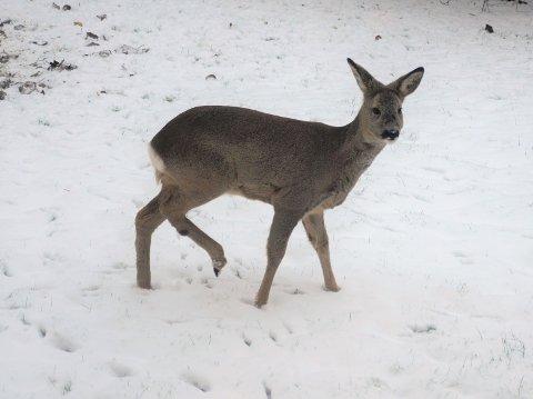STRESS: - Jaging og forstyrrelser kan føre til så store påkjenninger at viltet kan bukke under av stress, opplyser Bymiljøetaten.