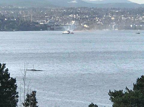 SMITTET: Tre har blitt syke etter bading i Oslofjorden.