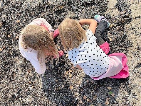 STRANDRYDDING: Ungene på Tofte SFO tar oppgavene under Strandryddeuka alvorlig, og fingransker stranda etter søppel.