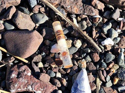 PASS PÅ! Det er funnet slike flere steder i distriktet i år. Denne ble funnet på Ringshaug mandag.