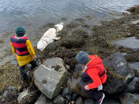 Emma og Frida synes det var spennende med hvalen de fant sammen med pappa Hallgeir, og lurte på hva som hadede skjedd med den.