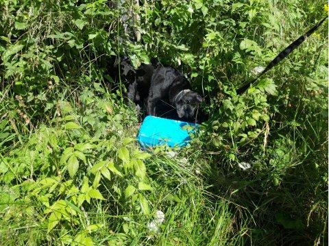 I GRØFTA: I denne skoeska ved bilen som hadde kjørt i grøfta fant tollerne 10 kilo amfetamin, tidlig om morgenen 24. juli i fjor.