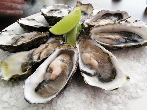 IKKE SPIS: Mattilsynet advarer mot å spise skjell, og særlig rå østers, fra Oslofjorden nå.