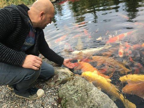 SOSIALE: – Eldre koi-fisk spiser gjerne av hånda di, forteller Kjetil Skjellrud som sammen med sin bror Øyvind driver import av koi-fisk fra Japan. FOTO: Steinar Knudsen