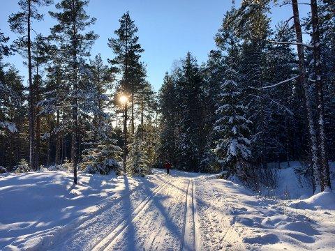 Finvær: – Det bygger seg opp et høytrykk over sør-Norge som vil gi sol og pent vær. Da vil de fleste også slippe unna tåka. Temperaturene vil ligge på rundt 0 grader på dagtid og opp mot fem/seks minusgrader om natten, sier Martin Granerød. Foto: Anita Gjøs