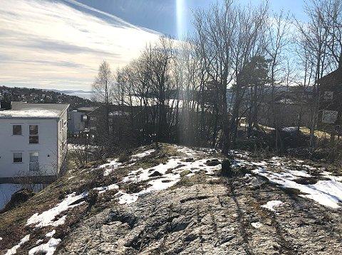 SOGSTI: Beboere i Sogstikroken i Drøbak ønsker å felle mellom 10 og 15 trær som skygger for sola og tar utsikt. FOTO: Ole Jonny Johansen