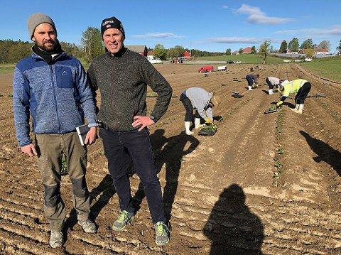 JORDBÆR: Per Fredrik Saxebøl og sønnen Fredrik har engasjert vietnamesere til å plante ut nye jordbærplanter. FOTO: Ole Jonny Johansen