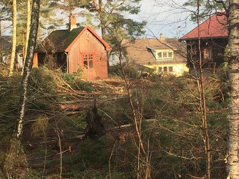 Utbygger Mubli as har startet hogging i Vesleskauen.