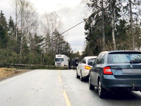Et av flere trefall i Amtaland. Her står trafikken på grunn av trefallet like ved Søndre Hallangen.