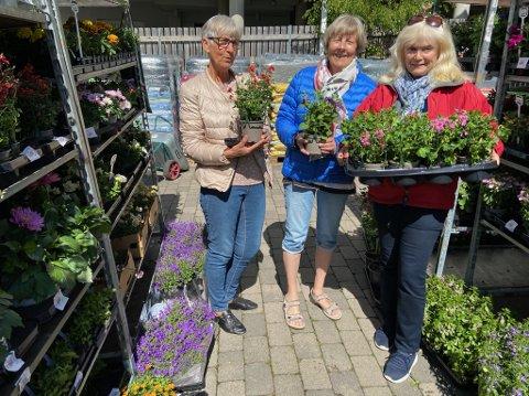 BLOMSTER UTE: Mai-Lise Ørbeck Jensen, Ranveig Beck og Bente Damlien er på jakt etter blomster til borettslaget. Noen blomster kan plantes ute til tross for det litt kjølige vårværet.