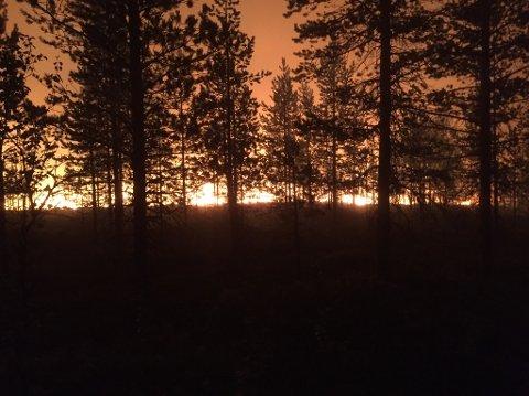 Over 20 000 hektar svensk skog var i flammer fredag morgen