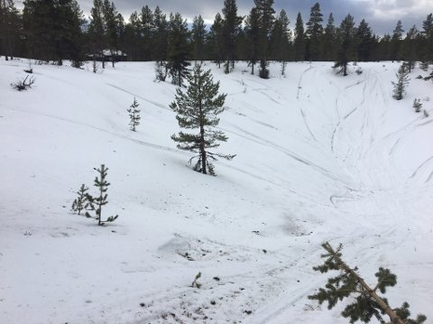 ULOVLIG KJØRING: Spor etter ulovlig snøscooterkjøring i naturreservatet på Ripan. Tynset kommune har forvaltningsmyndighet over verneområdet, noe som blant annet innebærer oppfølging av ulovligheter i samarbeid med SNO.