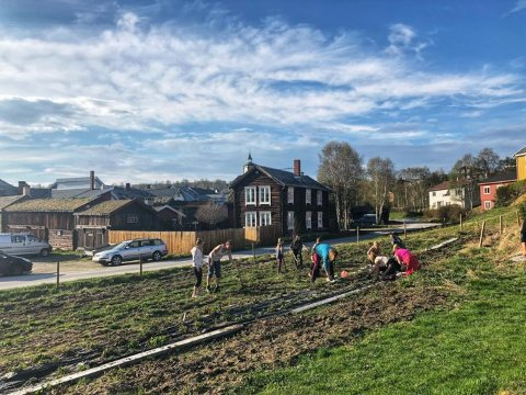 Pruberhagan parsellbruk, får Røros kommunes miljøpris