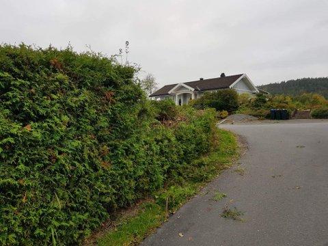 BLE BESKÅRET: Hensynet til trafikksikkerheten gjorde at Sandefjord kommune tok grep, og klippet deler av hekken til Mette Kristiansen. Den ser nå slik ut.