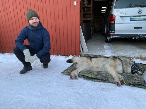 FLYTTING: Klima- og miljøvernminister Sveinung Rotevatn (V) var til stede da Elgå-ulven ble flyttet 4. januar.
