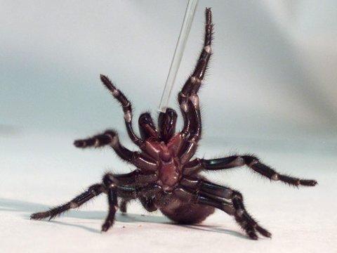 Edderkoppen er din venn. Den tar seg nemlig av andre heslige vesener som du har i boligen din.