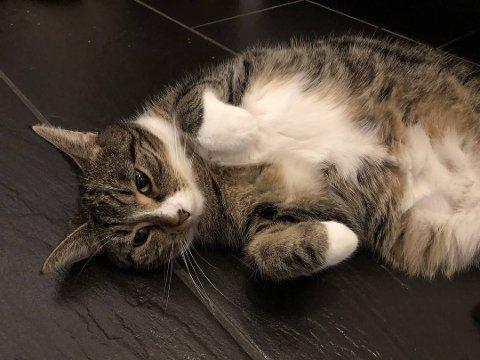 GROTSESK MISHANDLING: Katten Trixie funnet halshugget og død, kun 60 meter fra sitt eget hjem i august.