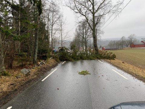 STOPP: Et tre har falt over veien i Sundbyveien søndag ettermiddag.