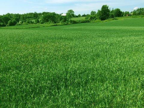 Kulturlandskapet sør for Ås tettsted starter ved Granveien og strekker seg sammenhengende sørover. Det er her en grønn grense bør settes for å skjerme verdiene i dette landskapet, mener innsenderne.