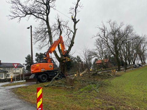 NÅR KOMMER NYE TRÆR?: Mange store og gamle trær  langs Kongeveien i Nordby har blitt felt fordi de var gamle og kunne falle ned. Når fylkeskommunen får plantet nye er nå usikkert.
