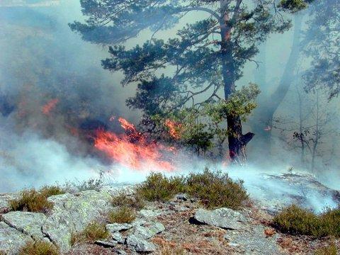 Vær forsiktig: Brannvesenet ber folk fortsatt være svært aktsomme i naturen (Foto: arkiv)