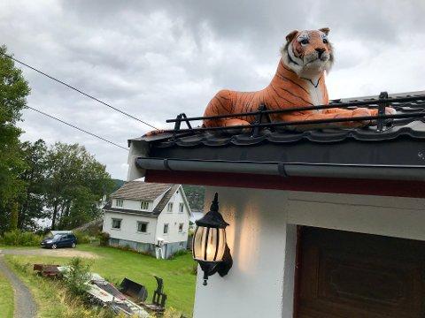 Tigeren på Hope, tilhører Frode Hansen. Den er blitt en liten turistattraksjon for flere stopper og tar bilde her. Den skuer ut på bilistene som kjører forbi.