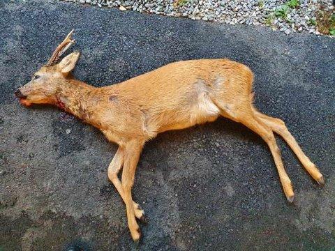 Politiet fant ulovlig ammunisjon i dyret som ble skutt på Søndeled søndag.