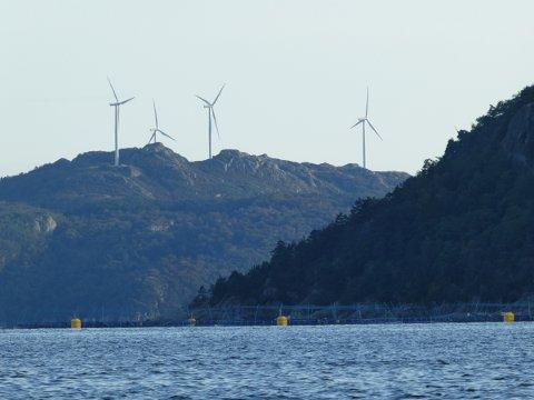 LISTA: Deler av vindkraftverket på Lista. På Syv år er det registrert seks fuglekollisjoner, av disse er det én havørn-kollisjon.