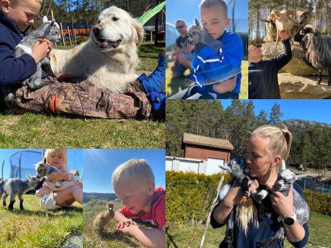 NYTT LIV: Både bokstavelig og billedlig talt er det nytt liv på gården på Fjotland. Familien med samme navn storkoser seg med vårstemning og viten om at gårdslivet såvidt er begynt.