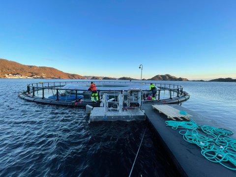 FORSKNING I FLEKKEFJORD: Selskapet Nekkar er et stort selskap innen tekniske løsninger for havbruk. De holder på å utvikle en lukket laksemerd som har fått navnet «Starfish».