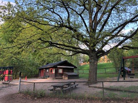 COLLETTS GATE 44: – Det har lenge vært et ønske om å få en hundepark på St. Hanshaugen, sier Jan Olav Nybo i Bymiljøetaten.