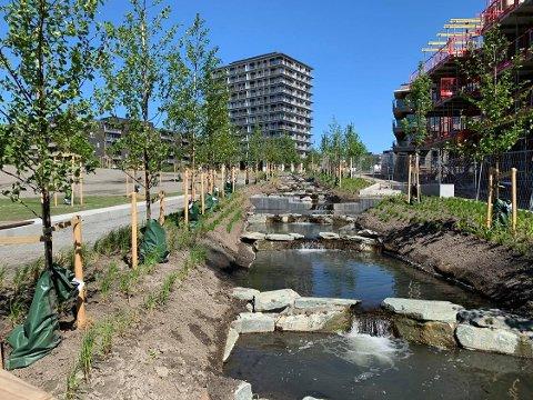 STRYK: Hovinbekken går i et slakt stryk gjennom den nye Tiedemannsparken på Ensjø.