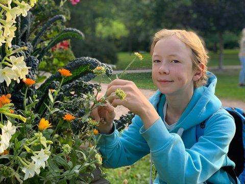 INTERESSERT: Rolf Ola Brendeford synes det er spennende å se hvordan blomstene har vokst i barokkhagen i Frognerparken.