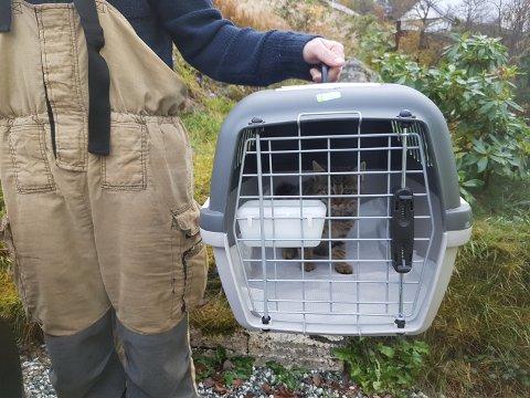 Denne katten vart frigjort frå ein peis i Eikangervåg. Eigarforholdet er uavklara.