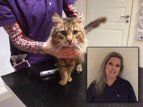 Som privatpersonar sette Therese i gang ein innsamlingsaksjon i håp om å dekket deler eller heile kostnadene for å hjelpe pusen. – Eg hadde ikkje hjarte til å sjå ein så kjærleg og tillitsfull katt verta avliva utan ein sjanse.