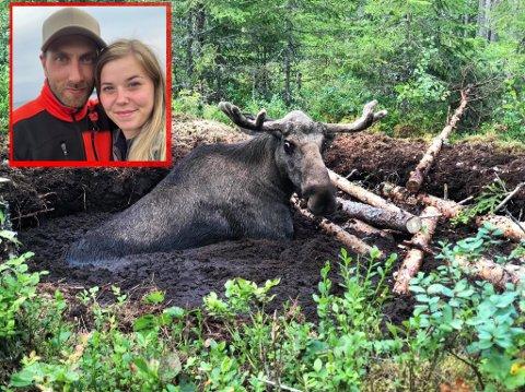 Hadde ikkje borna til Tommy Nielsen (33) og Sofie Henriksen insistert på å plukke bær hadde nok denne store elgoksen ikkje overlevd.