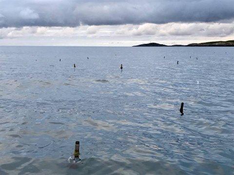 Dette synet møtte Cathrin Kaspersen da hun var ute og fisket i Fleinværsfjorden. I følge hun selv var det flere hundre flasker.