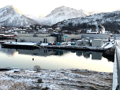 Internasjonal: Cermaq Norways produksjonsanlegg i Bogen har internasjonale eiere, selger laks på det internasjonale markedet og har ansatte fra 11 forskjellige nasjoner. Det er bestemt at arbeidsspråket på bedriften skal være norsk.
