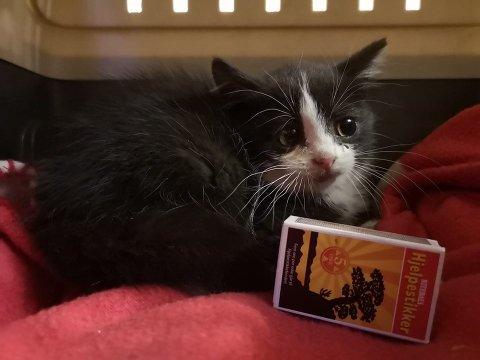 En av fire kattunger er funnet med livet i behold, etter at de ble forlatt av deres eiere.